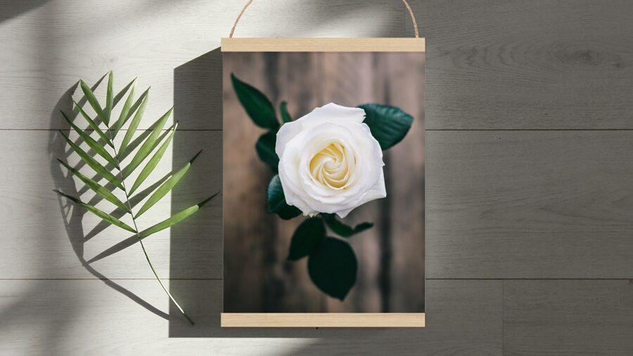 Balta roze