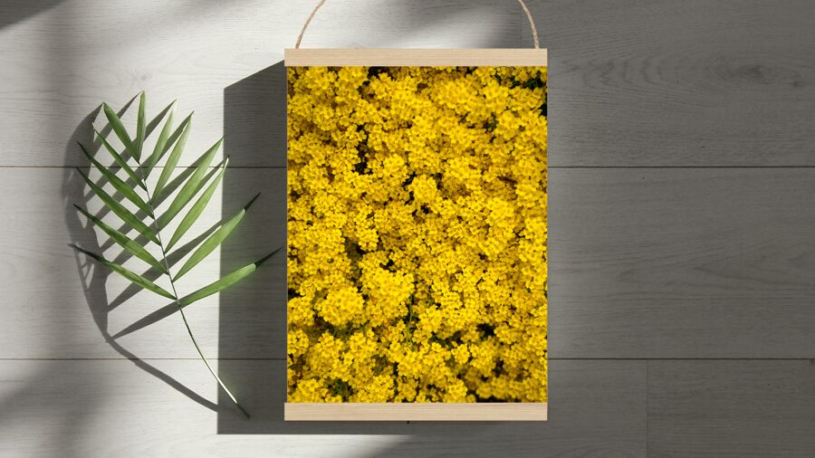 Dzelteni ziediņi