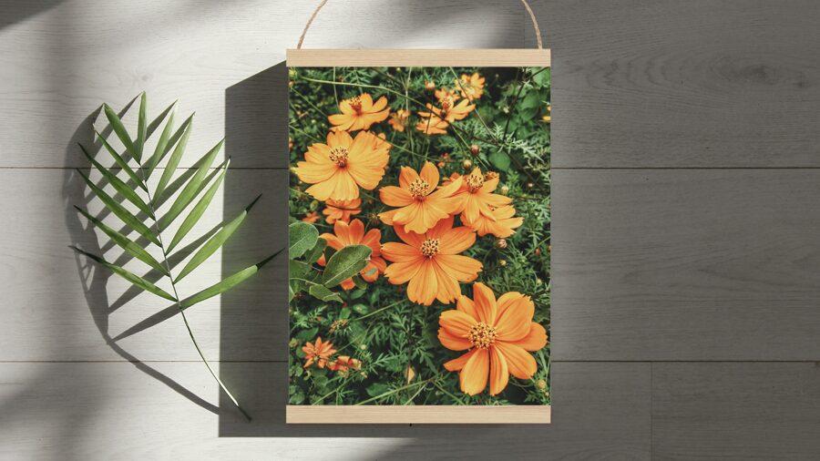 Oranži ziedi