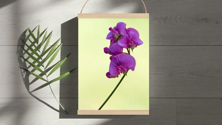 Violets puķuzirnis