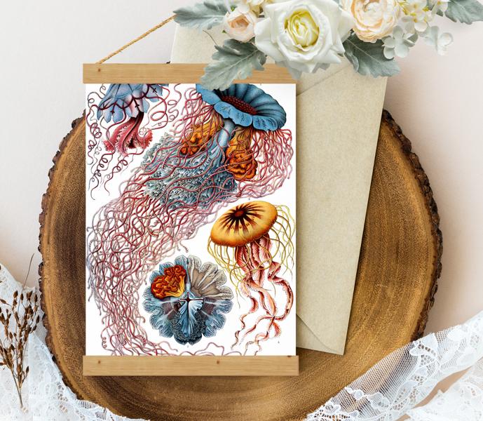 Sienas dekors - Vintage Haeckel Discomedusae_8