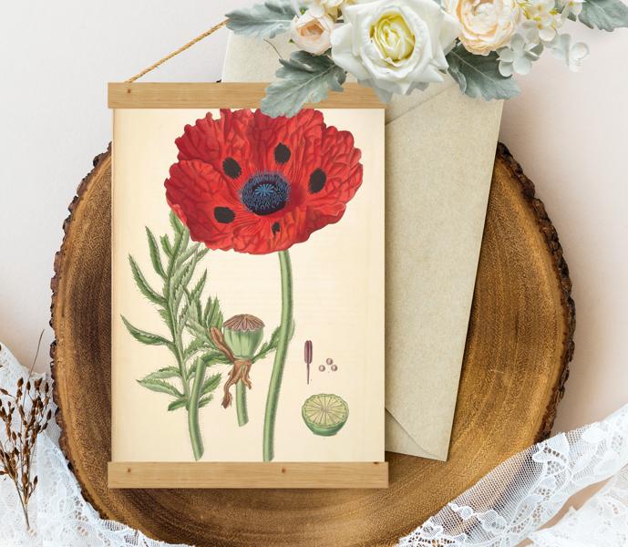 Sienas dekors - Vintage Great Scarlet Poppy