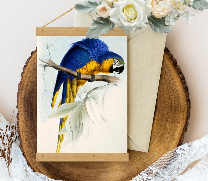 Sienas dekors Vintage Blue-yellow-Maccaw-by-Edward-Lear