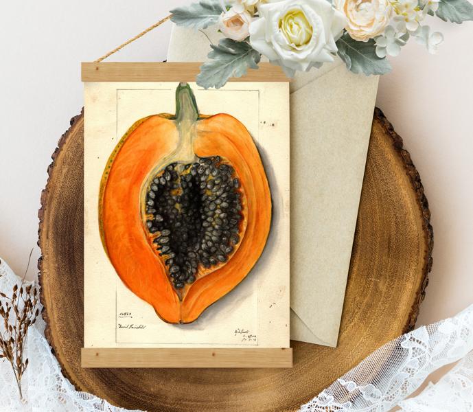 Sienas dekors - Vintage Papaija